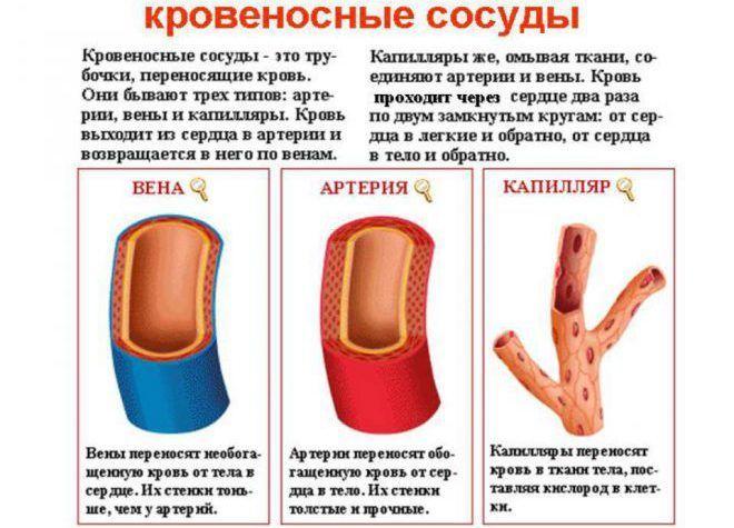 как почистить сосуды от бляшек и тромбов