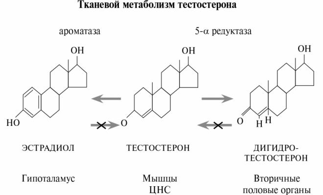 Дегидротестерон препараты