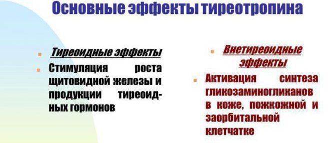 Основные эффекты тиреотропина