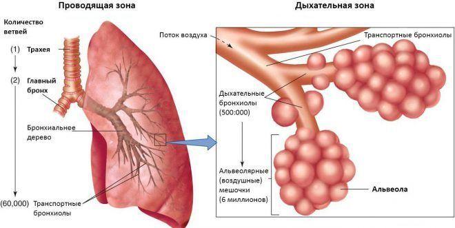 Основные симптомы астмы