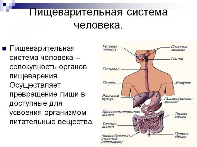Процесс переваривания пищи у человека схема