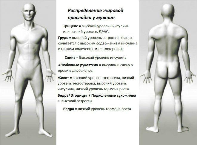 Распределение жировой прослойки у мужчин