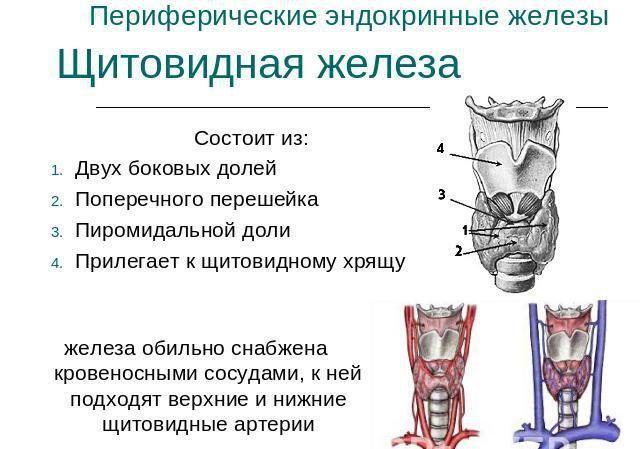 Расшифровка узи щитовидки