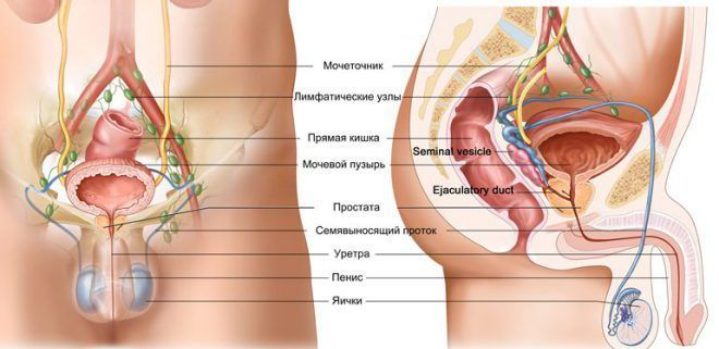 Симптомы опухоли яичка