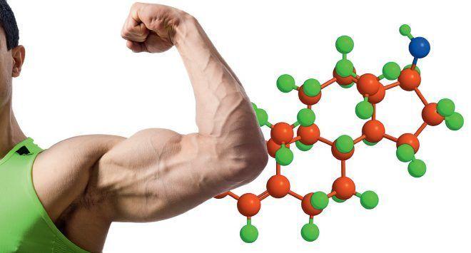 Тестостерон – король мужских половых гормонов