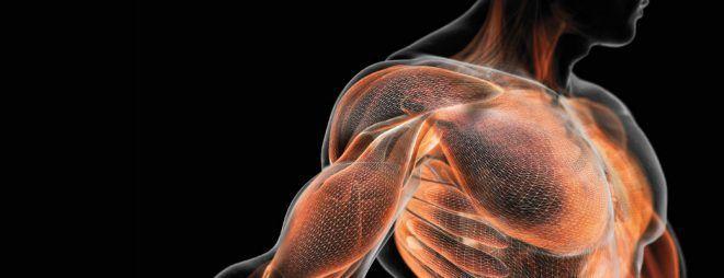 Увеличения объема мышечной массы