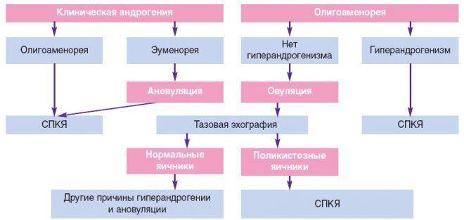 Выделение различных фенотипов пациенток с СПКЯ