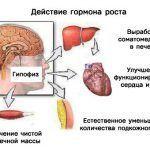 gormon-rosta