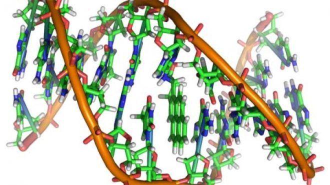 Генетические корни