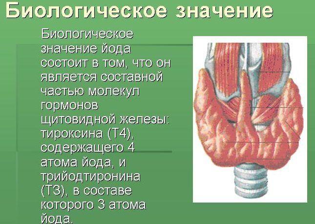 Медь регулирует тироксин в крови