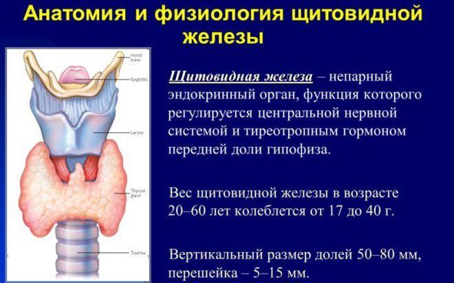 Нехватка гормонов щитовидной железы