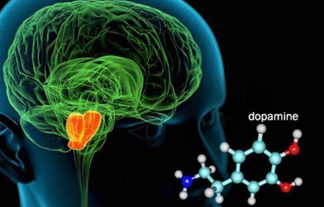 Уровень дофамина