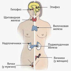 Органы-мишени у женщин и мужчин