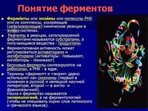 Ферменты или энзимы