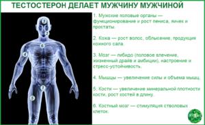 Тестостерон делает мужчину мужчиной
