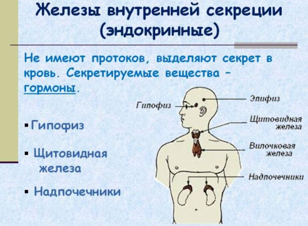 Железы внутренней секреции